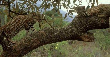 Tumbes manglares
